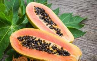 Папайя — вирощування в домашніх умовах з насіння, фото