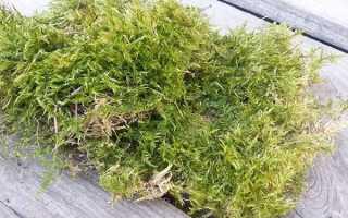 Лісовий мох сфагнум — способи вирощування вдома, як зберігати, відео