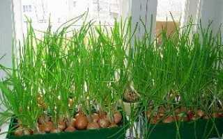 Як вирощувати овочі в горщиках будинку