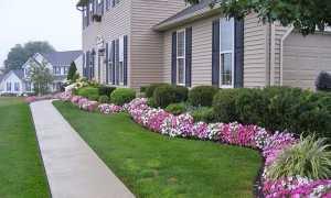 Багаторічні квіти для бордюрів — особливості вибору, відео
