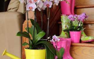 як правильно поливати орхідею в домашніх умовах, частота поливу під час цвітіння, відео