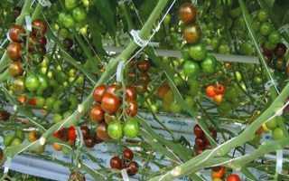 Кліпси для підв'язки рослин з Китаю, ціна, рекомендації щодо застосування