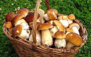 Правила збору грибів в лісі, рекомендації, техніка безпеки, відео
