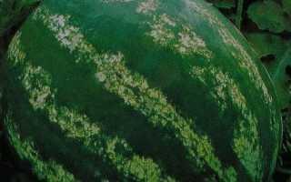 Кращі сорти кавунів з фото і описом для Підмосков'я, Середньої смуги, Сибіру, Уралу