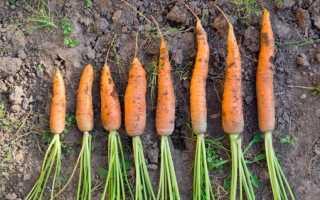 Зберігання моркви на зиму: в погребі і в домашніх умовах
