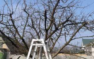 Яблуня — обрізка молодого дерева для формування крони, обрізка старого дерева для омолодження, відео