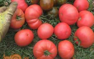 Кращі солодкі сорти рожевих помідорів з фото. Для відкритого грунту і теплиці. Відгуки, хто садив