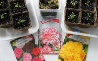 Як виростити розсаду гвоздики, посів, догляд, відео