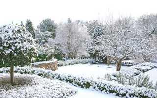 Клопоти дачника в січні — затримання снігу, захист дерев і чагарників від гризунів, відео