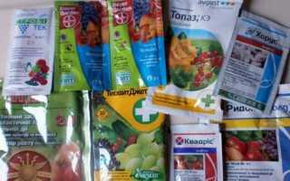 Фунгіциди для рослин [список препаратів, правила застосування]