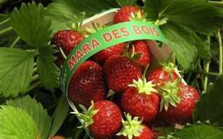 Сорти полуниці — опис, фото, відгуки садівників