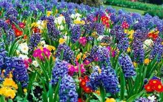 Які квіти висаджуємо і сіємо в квітні місяці, відео