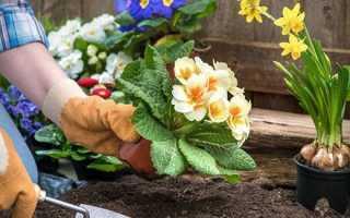 Пересадка багаторічних квітів на клумбах — терміни і способи пересадки, відео
