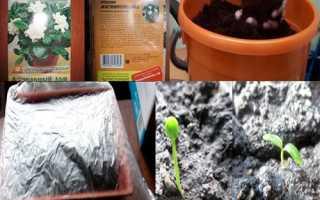 Як виростити гарденії з насіння, відео