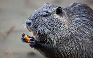 Годування тварин в нутріеводстве — особливості раціону, відео