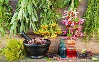 Лікарські рослини — кульбаба, алтей, ісопу, буркун, кровохлебка, шавлія, буквиця, опис і фото, відео