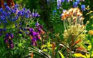 Які багаторічні квіти посадити на клумбі — фото, відео
