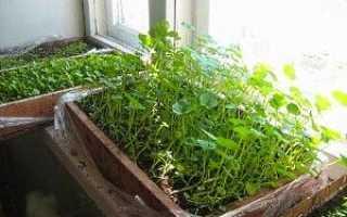 Коли садити квіти на розсаду, як правильно вирощувати — відео