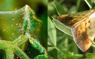 Біологічні препарати — використання для боротьби з шкідниками, відео