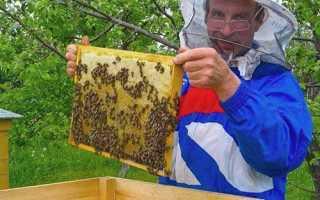 Гарбузовий мед — як приготувати, рецепт, відео