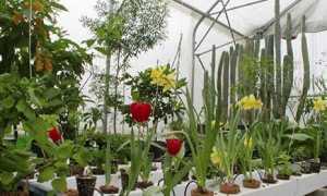 Гідропоніка — обладнання для вирощування овочів, квітів, розчин, світильники, піддони, відео