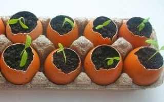 Розсада в яєчній шкаралупі — як виростити, відео