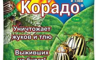 Препарат Корадо від колорадського жука — інструкція, доза, відео