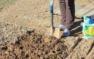 Що можна садити після часнику на наступний рік Після чого садити часник на грядці