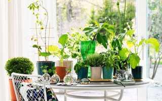 Найкрасивіші і незвичайні кімнатні рослини з фото — рідкісні