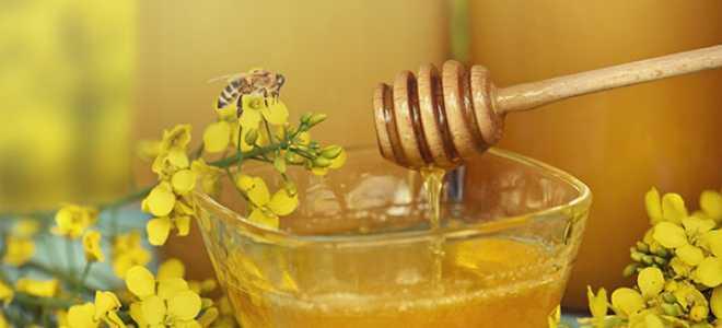 Ріпаковий мед — користь і шкода, протипоказання до застосування, відео