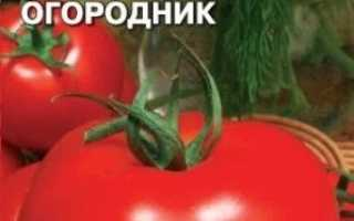 Сорти помідорів, стійкі до фітофтори: опис, характеристика, фото, відгуки