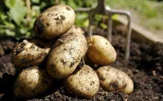 Яке добриво для картоплі краще при посадці: види і опису