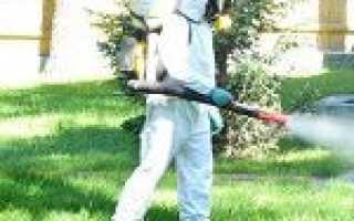 Обробка від кліщів на ділянці: підготовка території, коли і чим обробляти