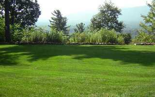 Трава для газону — насіння, травосмеси, багаторічна трава, яка не потребує стрижки, як сіяти, відео