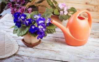 Як і чим годувати фіалки? Мінеральні і органічні добрива для сенполій. Підготовка розчинів. фото