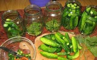 Мариновані огірки — кращі рецепти хрустких огірочків з фото і відео
