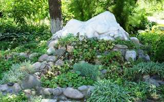 Рослини для альпійської гірки — фото і назви, правила оформлення, відео