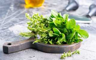 10 пряних рослин, які потрібно вирощувати, якщо любите готувати. Назви, опис, сорти, фото