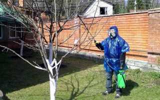 Правила обприскування мідним купоросом: як приготувати розчин, коли і як обробляти дерева