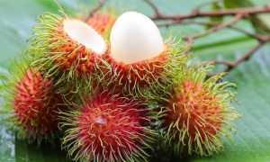 Рамбутан фрукт. Вирощування рамбутана. Властивості рамбутана