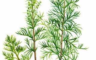 Кропове дерево — вирощування, посадка, догляд, добриво + фото, відео