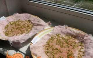 Догляд за розсадою помідорів в домашніх умовах від сходів до висадки