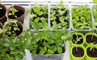 Вибираємо правильну ємність для вирощування розсади. фото