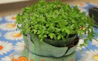 Вирощування розсади в равликів і пелюшках. Опис способу Юлії Міняєва з фото і відео