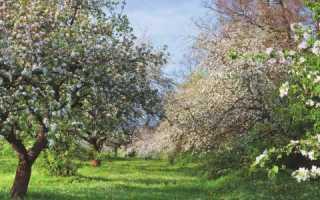 Плодові дерева — сумісність посадок, симбіоз різних видів, відео