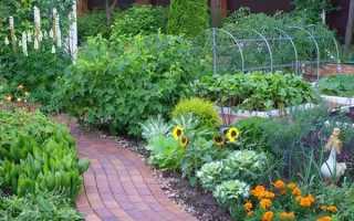 Чотири типових помилки початківців садівників, рекомендації, відео