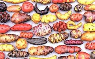 Найцікавіші факти з історії картоплі + відео