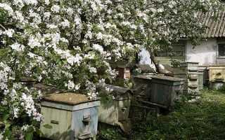 Бджільництво — весняні роботи на пасіці, поради починаючому пасічнику по роботах в травні, облаштуванні пасіки, відео