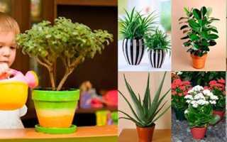 Рослини для дитячої кімнати — як вибрати корисні рослини, відео
