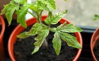 Чого не вистачає томатів? Ознаки нестачі елементів живлення. фото